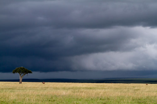 single tree on open plains with approaching storm