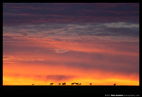 herd of topi silhouetted in front of vivid sunrise